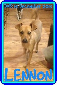 Terrier (Unknown Type, Medium) Mix Dog for adoption in Halifax, Nova Scotia - LENNON