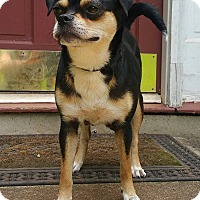 Adopt A Pet :: Bandanna - Lawrenceville, GA