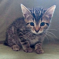 Adopt A Pet :: Sterling - Jefferson, NC