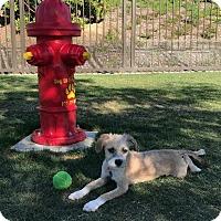Adopt A Pet :: Mira - San Diego, CA