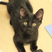 Adopt A Pet :: Frisky - Naperville, IL