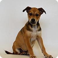 Adopt A Pet :: HACKI - New Iberia, LA