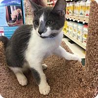 Adopt A Pet :: Howard - Buffalo, NY