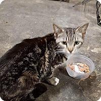 Adopt A Pet :: Natalie - Virginia Beach, VA