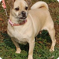 Adopt A Pet :: Pfeiffer - Winder, GA