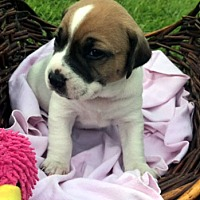 Adopt A Pet :: TESSA - ADOPTION PENDING! - Pennsville, NJ
