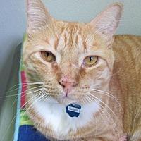 Adopt A Pet :: Garfield - Cumberland, ME