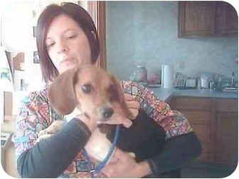 Beagle Mix Dog for adoption in Higginsville, Missouri - unknown