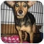 Photo 1 - Chihuahua/Terrier (Unknown Type, Small) Mix Dog for adoption in Cincinnati, Ohio - Toni: in Covedale
