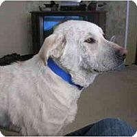 Adopt A Pet :: Stewart - Glastonbury, CT