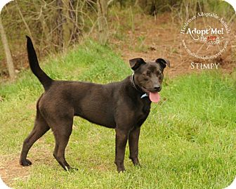 Labrador Retriever Mix Dog for adoption in Bolivar, Tennessee - Stimpy
