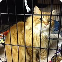 Adopt A Pet :: Graham Cracker - Byron Center, MI