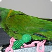 Adopt A Pet :: Charlie - Northbrook, IL