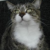 Adopt A Pet :: Susie - Naples, FL