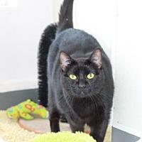 Adopt A Pet :: Lola - Covington, LA