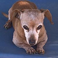 Adopt A Pet :: Limbo - Aqua Dulce, CA