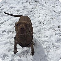 Adopt A Pet :: Molly - Coudersport, PA