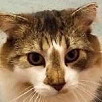 Adopt A Pet :: Parker - Manchester, CT