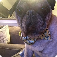 Adopt A Pet :: Mortimer - Austin, TX