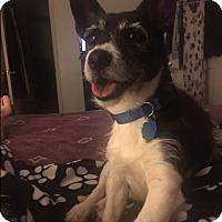 Adopt A Pet :: Mingo - Ball Ground, GA