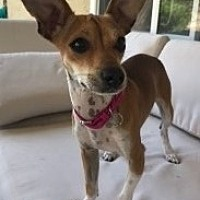 Adopt A Pet :: Molly - San Diego, CA
