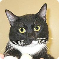 Adopt A Pet :: 351951 - Wildomar, CA