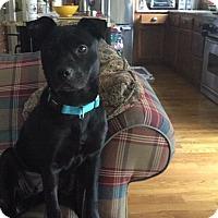 Adopt A Pet :: Piper - Eden Prairie, MN
