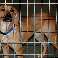 Adopt A Pet :: Cassadee - Salem, WV