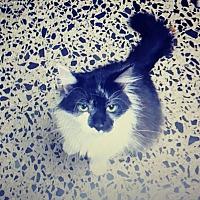 Adopt A Pet :: Mouse - Trevose, PA