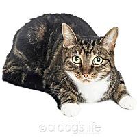 Adopt A Pet :: Kiki - Tempe, AZ
