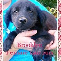 Adopt A Pet :: Brooklyn - Ringwood, NJ