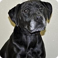 Adopt A Pet :: Colette - Port Washington, NY