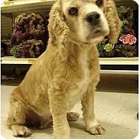 Adopt A Pet :: Dolly - Sugarland, TX