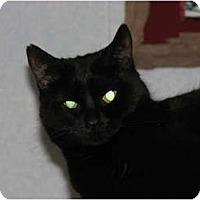 Adopt A Pet :: Star - Richfield, OH