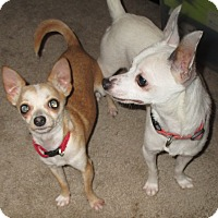 Adopt A Pet :: Rocket and Bullit - Jacksonville, FL