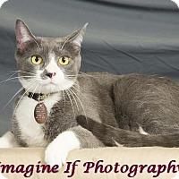 Adopt A Pet :: Hugo - Edmond, OK