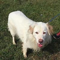 Adopt A Pet :: SABOR! - Owenboro, KY