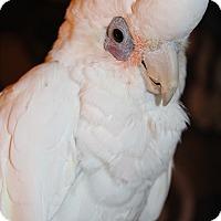 Adopt A Pet :: Delaney - Woodbridge, NJ
