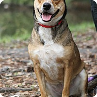 Australian Cattle Dog Mix Dog for adoption in Jacksonville, Florida - Betty Spaghetti