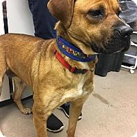 Adopt A Pet :: Suzie at Madison Hts - Warren, MI