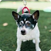 Adopt A Pet :: Nona - Bradenton, FL
