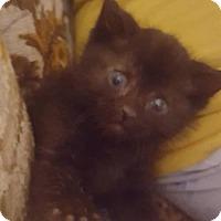 Adopt A Pet :: Flynn 1587 - Alva, OK