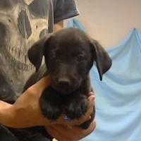 Adopt A Pet :: 35672490 - Los Lunas, NM