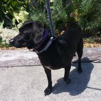 Adopt A Pet :: Rocco - Camano Island, WA