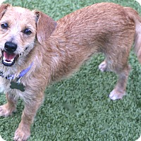 Adopt A Pet :: Lester always happy - Allentown, PA