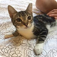 Adopt A Pet :: Delta - Simpsonville, SC