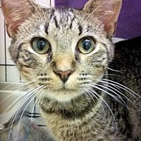 Adopt A Pet :: London - Lunenburg, MA