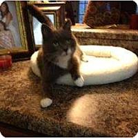 Adopt A Pet :: Pumpkin - Mobile, AL