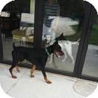 Adopt A Pet :: Blakey - spring valley, CA