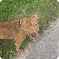 Adopt A Pet :: #314-14  ADOPTED! - Zanesville, OH